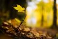 Картинка лес, желтый, лист, листок