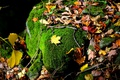 Картинка камень, осень, мох, листья