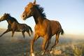 Картинка поле, небо, пыль, лошади, бег, аллюр