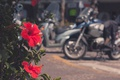 Картинка цветок, красный, лепестки
