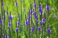 Картинка поле, трава, макро, цветы, луг