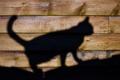Картинка тень, кошак, силуэт, котяра