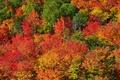 Картинка осень, лес, листья, деревья, склон