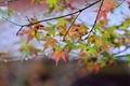 Картинка осень, листья, пасмурно, ветка