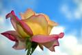 Картинка небо, макро, роза, лепестки