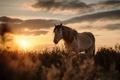Картинка закат, природа, Mountain Pony
