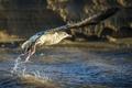Картинка природа, птица, вода