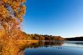 Картинка осень, деревья, пейзаж, птицы, озеро, утки, США