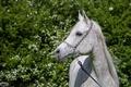 Картинка лето, морда, свет, конь, лошадь, грива, грация