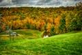 Картинка листья, лес, осень, трава, холмы, подъемник