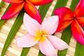 Картинка цветы, flowers, листики, leaves, нежные цветочки, delicate flowers