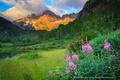 Картинка цветы, озеро, горы, природа