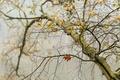 Картинка осень, листья, дерево, паутина