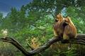Картинка лес, природа, примат, гелада