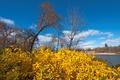 Картинка осень, небо, листья, деревья, пейзаж, река, кусты