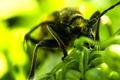 Картинка макро, насекомые, природа