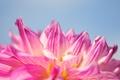 Картинка цветок, небо, макро, розовый, лепестки