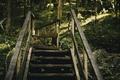 Картинка природа, лестница, ступени