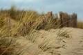 Картинка песок, пляж, трава