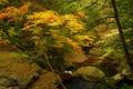 Картинка осень, лес, деревья, река, ручей, камни