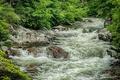 Картинка зелень, вода, река, камни, заросли, поток, речка