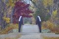Картинка природа, мостик, осень, парк, деревья