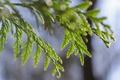 Картинка макро, ветки, зеленый, растение