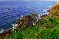 Картинка море, небо, трава, цветы, скалы