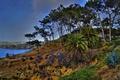 Картинка небо, деревья, цветы, природа, скалы, залив, сша