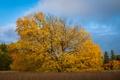Картинка поле, осень, трава, дерево