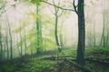 Картинка лес, трава, листья, деревья, туман, дерево