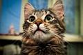 Картинка кошка, глаза, кот, взгляд, кошки