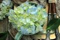 Картинка чашки, лепестки, цветы