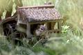 Картинка chipmunks, домик, природа