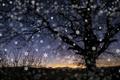 Картинка дерево, снежнки, ночь