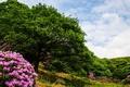 Картинка деревья, цветы, камень, цветение, кустарники