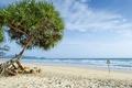 Картинка море, волны, пляж, дерево, знак