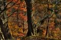 Картинка осень, лес, деревья, склон