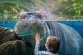 Картинка стекло, мальчик, бегемот