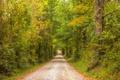 Картинка дорога, осень, лес, листья, деревья, листва, солнечные лучи