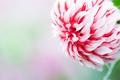 Картинка цветок, обои, лепестки, бутон