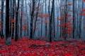 Картинка осень, лес, природа, цвет