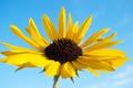 Картинка цветок, небо, природа, растение, лепестки