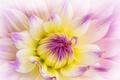 Картинка макро, цветок, природа