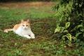 Картинка кот, отдых, трава, кошка