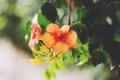 Картинка листья, цветы, лепестки