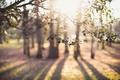 Картинка ветки, свет, листья, природа