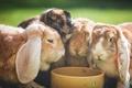Картинка природа, фон, кролики