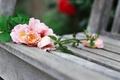 Картинка фон, скамья, цветы