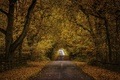 Картинка дорога, осень, листья, деревья, ветки, листва, забор